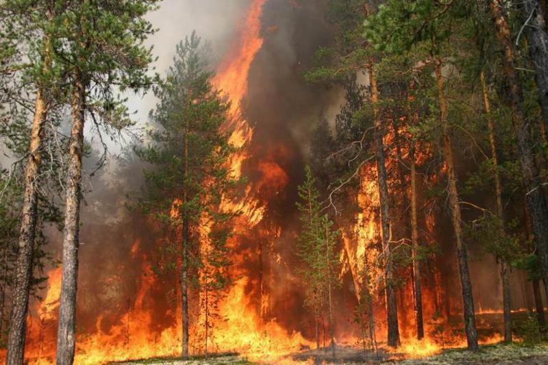 Как бороться с огнем в лесу