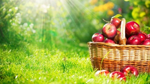 Килограмм красных яблок. История об отношениях.