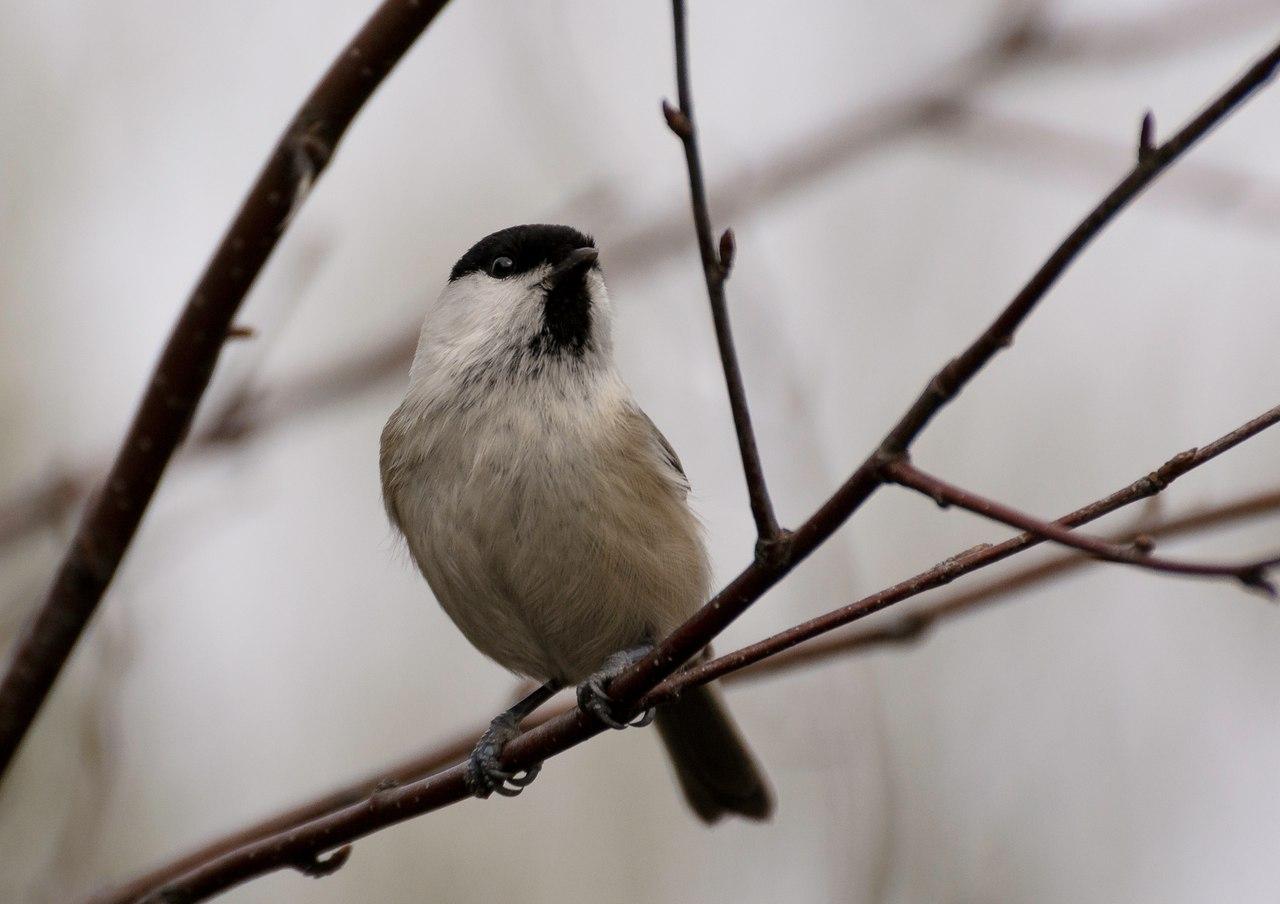 Роль птиц в жизни леса