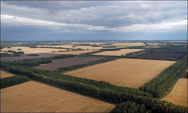 Роль агролесомелиоративных защитных насаждений в сельском хозяйстве Акмолинской области и факторы, влияющие на их сохранность