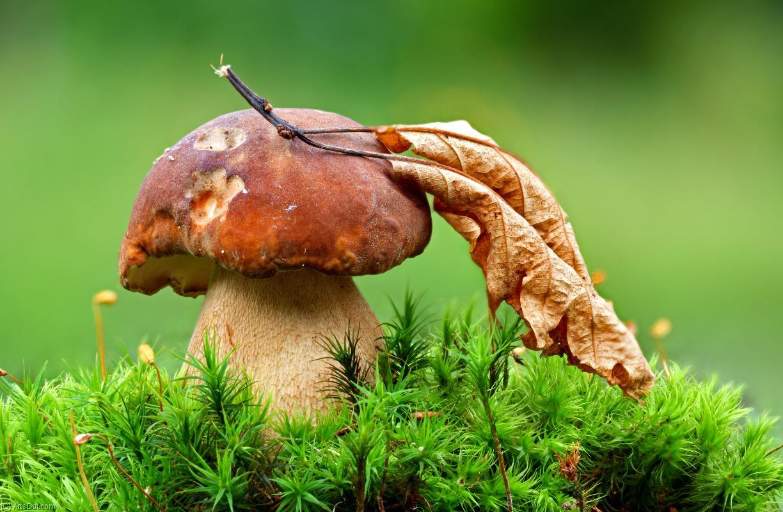 Сезон грибной