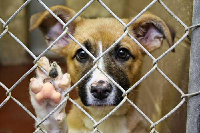 Почему статья о жестоком обращении с животными не работает в Казахстане