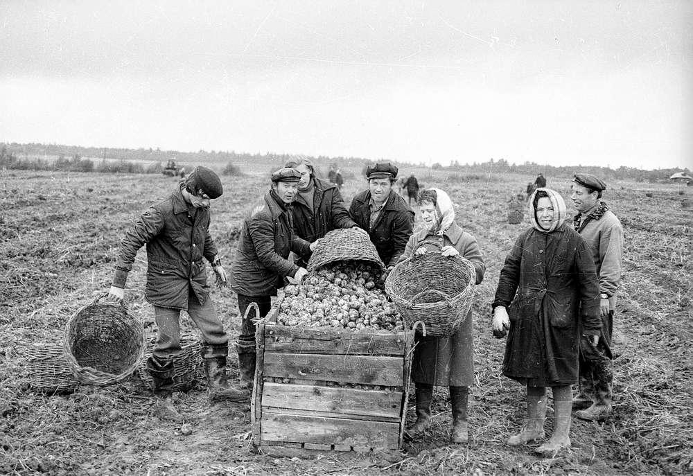 СССР — трудовое рабство и гнилая капуста