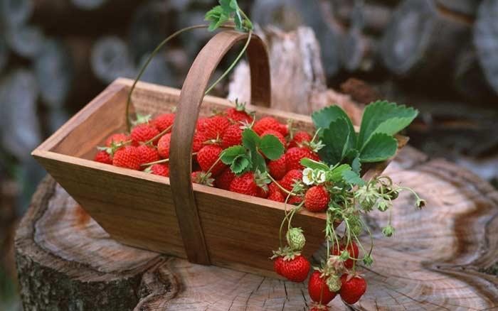 Как вырастить из семян садовую землянику