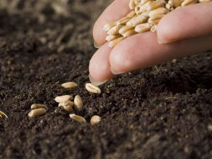 Заготовка, хранение и скарификация трудно прорастающих семян