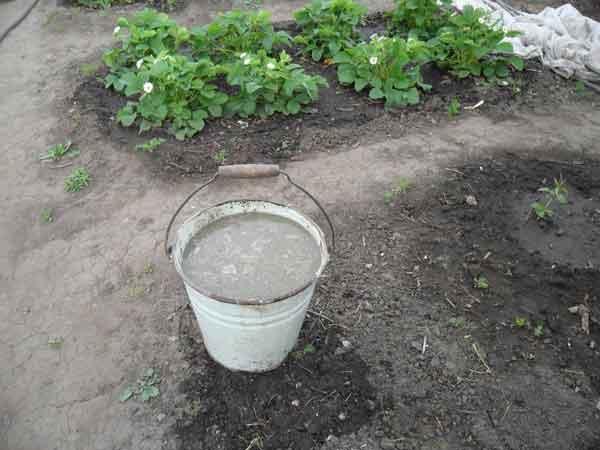 Как сделать жидкое удобрение для огорода