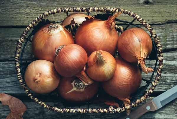 Как вырастить крупным лук?