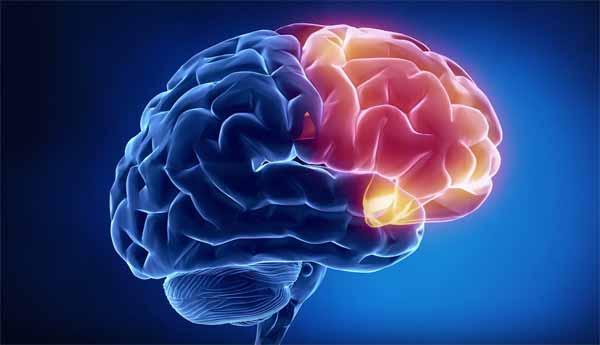 15 сенсационно-пугающих цитат нейролингвиста Татьяны Черниговской о сюрпризах мозга