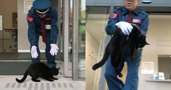 Противостояние охранников и животных: в Японии коты уже 2 года пытаются попасть в музей