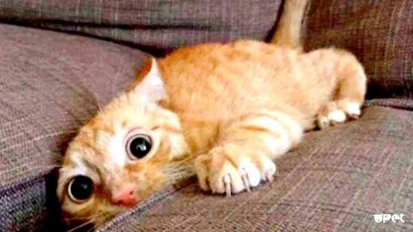 6 странных кошачьих привычек, которым, оказывается, есть объяснение