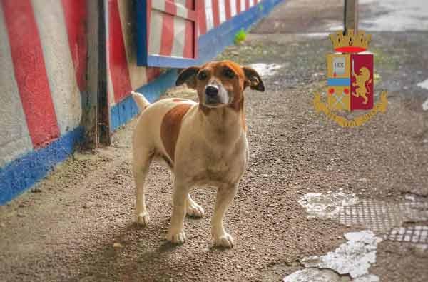 Собака, которая перешла дорогу мафии: «Каморра» предлагает 5 тысяч евро за голову полицейского пса