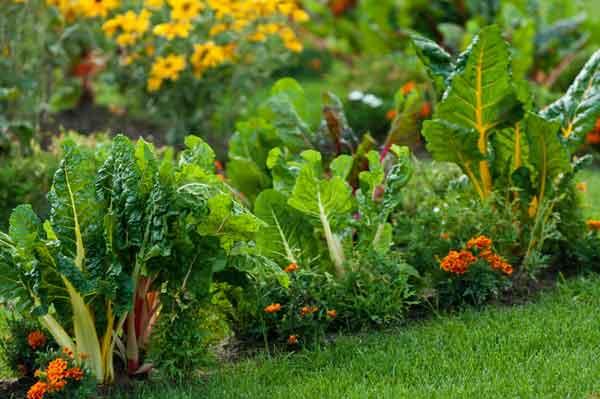 Схема овощной клумбы, чтоб все культуры находились в выгодном для них соседстве