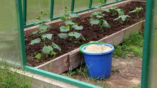 Как использовать опилки в огороде