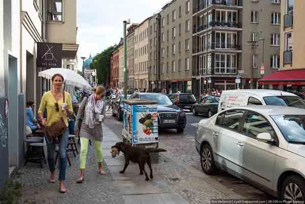 Почему в Германии нет бездомных животных?