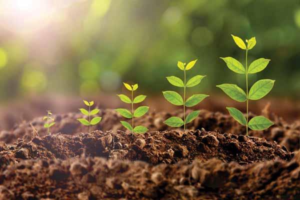 Стимуляторы роста и влияние их на посевные качества семян, и на регулировку роста растений