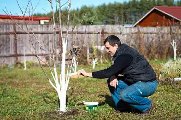 Весенние работы в садах, огородах и цветниках