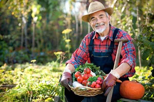 Словарь терминов для начинающих садоводов-любителей