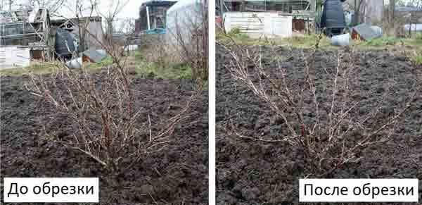 Период между относительным (зимним) покоем и началом вегетации