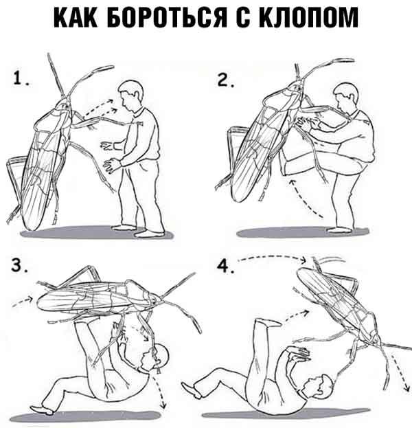 Как драться с клопами в отеле — важная инструкция