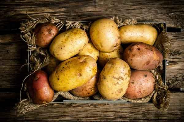 Размножаем картофель – семенной способ