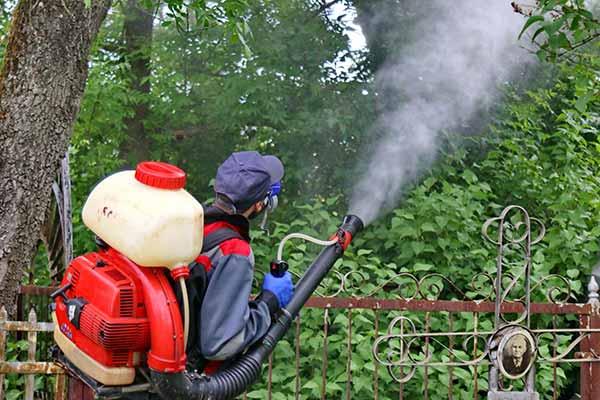 Защита городских озеленительных насаждений от вредителей